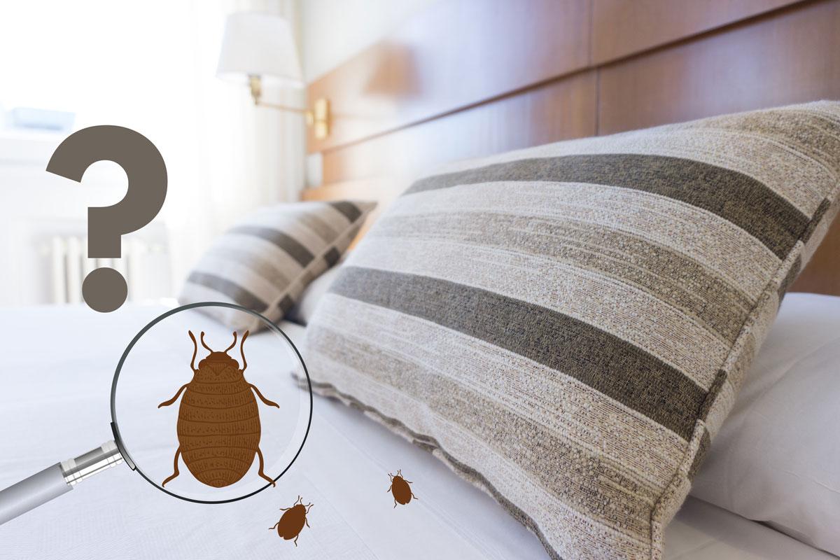 comment trouver le nid des punaises de lit